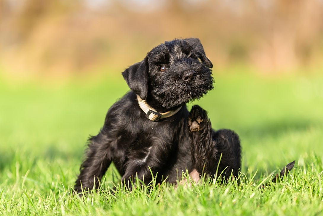 Dogtor Andy – My Top Tips for Treating Your Dog's Itchy Skin
