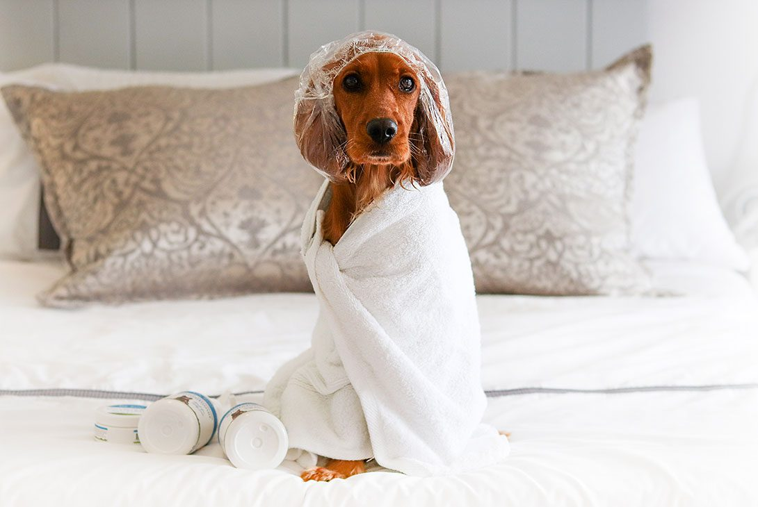 It's a Ruff Life: How to Manage Bath Time Anxiety