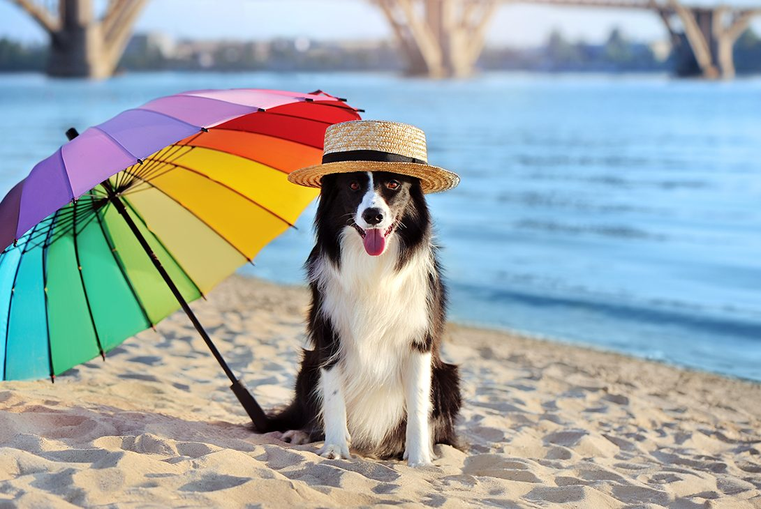 Keep Your Pooch Cool This Summer