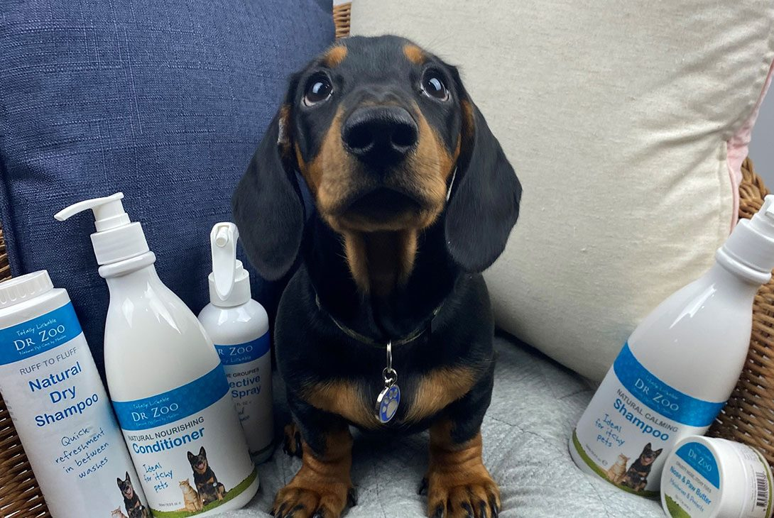 Staff Favourites – The Products We're Super Paw-ssionate About