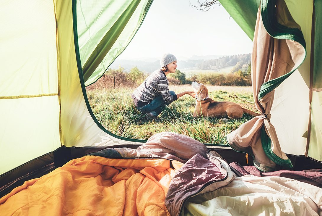 Thinking of Going Camping? With a little planning, your dog can go too!