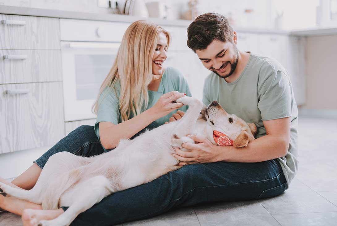 Co-Parenting Your Pet