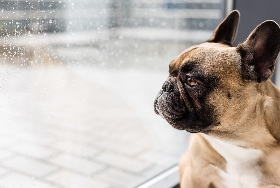 Wet Weather and your Pet